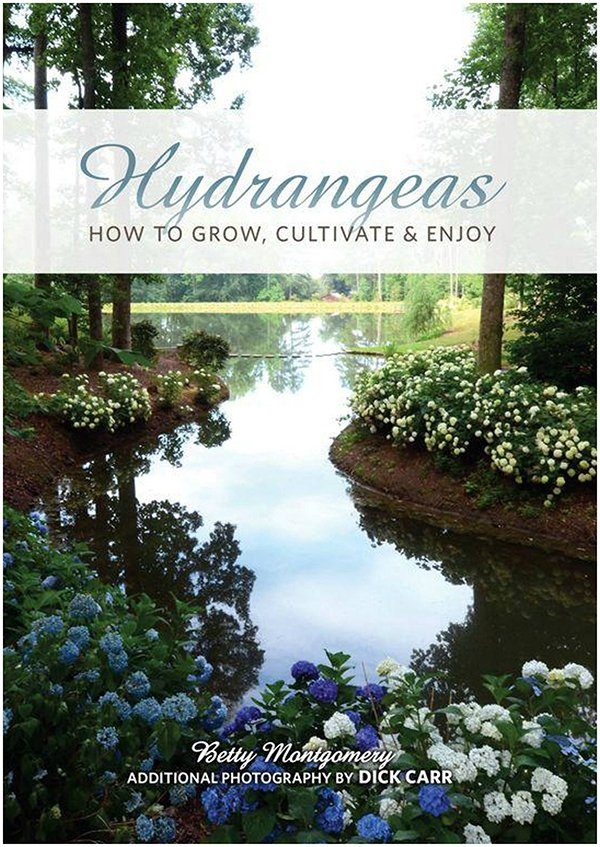 Hydrangeas: How to Grow, Cultivate & Enjoy
